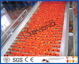 Pomodoro che pianta la linea di trasformazione in pieno/t/h dei semi 2 automatici - 50 del pomodoro a macchina